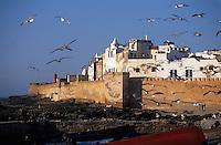 Afrique/Maghreb/Maroc/Essaouira : Le port de pêche et la cité