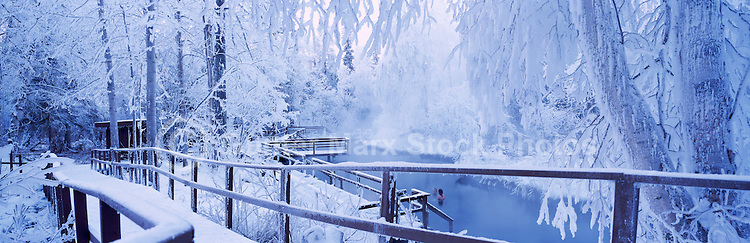 Snow Covered Liard Hot Springs in Liard River Hot Springs Provincial Park, Northern British Columbia, Canada, in Winter - Panoramic View