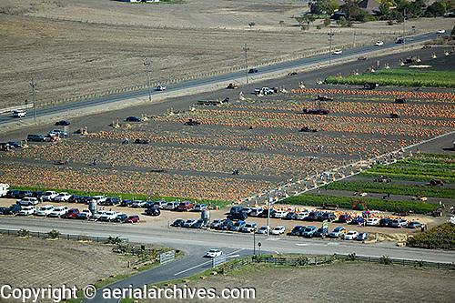 aerial photograph pumpkin sale, Adobe Farms, Petaluma, Sonoma county, California
