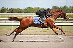 #6Fasig-Tipton Florida Sale,Under Tack Show. Palm Meadows Florida 03-23-2012