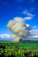 Sugarcane fire in Central Valley on Maui with papaya trees in foreground