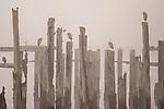 Wood Pilings In Fog