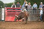 SEBRA - Jane Lew, WV - 7.19.2014 - Bulls & Action