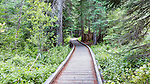 Boardwalk snakes through evergreen forests at Trillium Lake in the Mt. Hood National Forest.