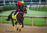 LOUISVILLE, KY - MAY 04: Danzing Candy gallops in preparation for the Kentucky Derby at Churchill Downs on May 04, 2016 in Louisville, Kentucky. (Photo by Zoe Metz/Eclipse Sportswire/Getty Images)