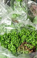 Lettuce in plastic bags at farmer's market