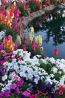 Flower garden at pond side. Palm Desert, California