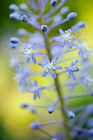 Special Plants, Derry Watkins - June