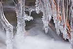 Icicles, Mt. Rainier National Park, Washington, USA