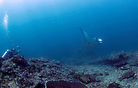 Scuba divers get a glipmese of a manta. Underwater landscape by Manta Point, a popular diving destination by the island of Nusa Penida.