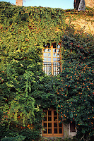Rampicanti sul muro. Climbers plants  on the wall......