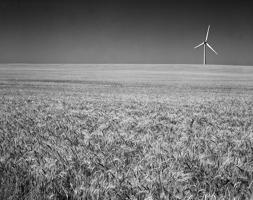 A single wind generator sits over a wheat field in the vast and open Great Plains.