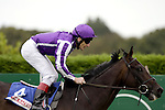 September 05, 2009: Poet ridden by Johnny Murtagh and trained by Aidan O'Brien win the Attheraces Kilternan Stakes. Leopardstown Racecourse, Dublin, Ireland.