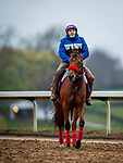 October 30, 2020: Lady Prancealot, trained by trainer Richard Baltas, exercises in preparation for the Breeders' Cup Filly & Mare Turf at Keeneland Racetrack in Lexington, Kentucky on October 30, 2020. Alex Evers/Eclipse Sportswire/Breeders Cup