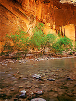 North Fork Virgin River. The Narrows, Zion National Park. Utah