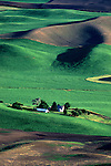 Farm house among hills of green and cleared fields, sunset light from Steptoe Butte State Park, Eastern Washington State USA.