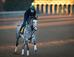 Tacitus, trained by William I. Mott, exercises in preparation for the Breeders' Cup Classic at Keeneland 10.31.20.