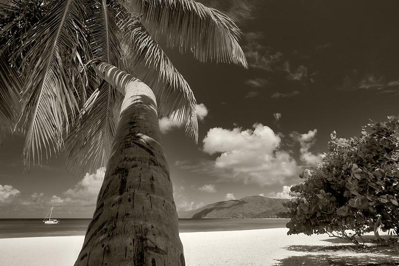Palm tree at Brewers Bay Beach. St. Thomas. US Virgin Islands.