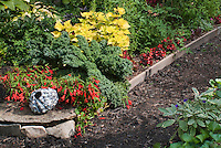 Begonia Million Kisses Romance with kale, Solenostemon Pineapple Queen, ornamental pot, in garden use of annuals and vegetables, foliage and flowers