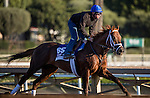 ARCADIA, CA - NOVEMBER 03: Tamarkuz, owned by Shadwell Stable and trained by Kiaran P. McLaughlin, exercises in preparation for the Breeders' Cup Las Vegas Dirt Mile at Santa Anita Park on November 03, 2016 in Arcadia, California. (Photo by Alex Evers/Eclipse Sportswire/Getty Images)