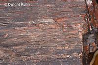 CX15-525z Petrified Wood Fossil