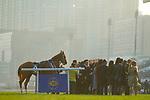 SHA TIN,HONG KONG-DECEMBER 10: Time Warp,ridden by Zac Parton, after winning the Hong Kong Cup at Sha Tin Racecourse on December 10,2017 in Sha Tin,New Territories,Hong Kong (Photo by Kaz Ishida/Eclipse Sportswire/Getty Images)