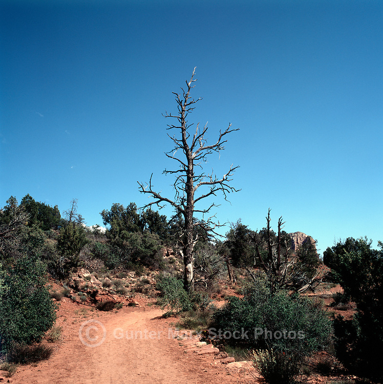 Hiking Trail in Red Rock Country near Sedona, Arizona, USA