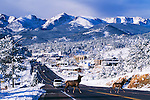 Two elk crossing US Highway 34 on a winter day in the Rocky Mountains at Estes Park, Colorado, USA