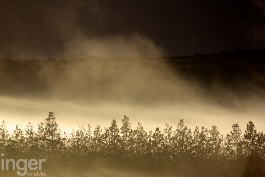 Misty morning in the wine region of South Africa