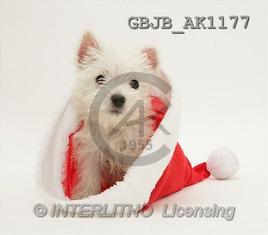 Kim, CHRISTMAS ANIMALS, photos(GBJBAK1177,#XA#) stickers