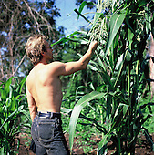 Moygu village, Brazil. Sting looking at a crop of maize in the Txicao (Ikpeng) Indian area; Xingu Indigenous area, Brazil, Nov 1990.
