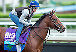 ARCADIA, CA - NOV 01: Oscar Performance, owned by American Racing, LLC and trained by Brian A. Lynch, exercises in preparation for the Breeders' Cup Juvenile Turf at Santa Anita Park on November 1, 2016 in Arcadia, California. (Photo by Kazushi Ishida/Eclipse Sportswire/Breeders Cup)