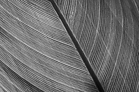 A close examination of a leaf, converted to black and white, reveals and accentuates its natural lines and patterns - its design.