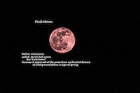 """Farmer's Almanac says Native Americans named  April's full moon  the Pink Moon for """"the herb moss pink, or wild ground phlox, which is one of the earliest widespread flowers of the spring."""""""