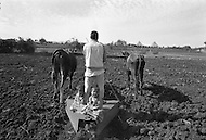 Children work in farm fields outside of Cairo, Egypt  - Child labor as seen around the world between 1979 and 1980 – Photographer Jean Pierre Laffont, touched by the suffering of child workers, chronicled their plight in 12 countries over the course of one year.  Laffont was awarded The World Press Award and Madeline Ross Award among many others for his work.