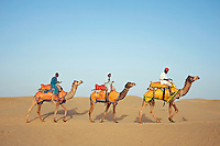 Camels in the Thar Desert Rajasthan India