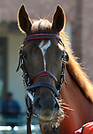 09 September 19: Mingun Miss prior to the grade 3 Natalma Stakes for two year old fillies at Woodbine Racetrack in Rexdale, Ontario.