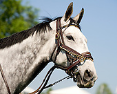 A head shot of 2010 Eclipse-award winner Slip Away, who prepped for the Grade 1 Iroquois on the flat at Mineral Springs.