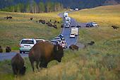 Cars at buffalo crossing