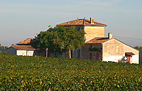 Chateau Lafleur and vineyard, Pomerol, Bordeaux