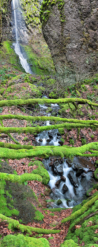 Cabin Creek and Cabin Falls with moss coverted downed tree. Columbia River Gorge National Scenic Area, Oregon