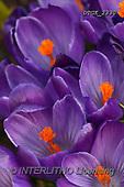 Gisela, FLOWERS, BLUMEN, FLORES, photos+++++,DTGK2330,#F#, EVERYDAY