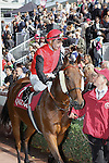 .Gentoo wins the race. Jockey Gerald Mosse Owner : S TRipier Mondancin. Trainer : Lyon (S). Gerald Mosse riding Gentoo