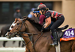 DEL MAR, CA - OCTOBER 29:  War Flag, owned by Joseph Allen, LLC and trained by Claude R. McGaughey III, exercises in preparation for Breeders' Cup Filly & Mare Turf at Del Mar Thoroughbred Club on October 29, 2017 in Del Mar, California. (Photo by Alex Evers/Eclipse Sportswire/Breeders Cup)