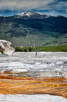 Skeletal Tree at Mammoth Hot Springs ©2018 James D Peterson.  This is just one of the many otherworldly scenes in Yellowstone National Park.