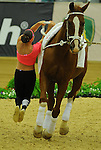 8 October 2010: Christa Kristofics-Binder (AUT) performs during the Vaulting Techincals in the World Equestrian Games in Lexington, Kentucky
