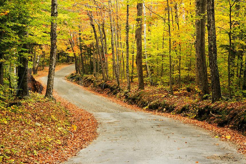 Road through autumn forest, White Mountains near Gorham, Vermont, US