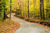 Road through autumn forest, White Mountains near Gorham, Vermont, US