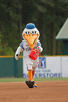 Myrtle Beach Pelicans mascot Splash Pelican (50) during a game against the Frederick Keys at Ticketreturn.com Field at Pelicans Ballpark on April 10, 2016 in Myrtle Beach, South Carolina. Myrtle Beach defeated Frederick 7-5. (Robert Gurganus/Four Seam Images)