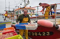 France, Bretagne, (29), Finistère,  Le Guilvinec: le port de pêche,  retour des bateaux de pêche, déchargement du poisson